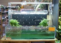 システムテラ&明るさの変えられる海水水槽