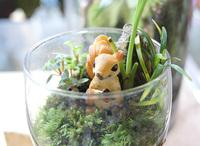 苔の寄せ植えで、寒い季節も室内に緑を