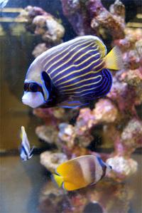 海水魚を飼ってみたい時の水槽