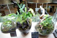 KokeLABO「コケリウム」で苔を水槽やガラスの器にレイアウト
