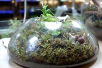 ブームの兆し「コケリウム」 お部屋で苔を楽しみましょう