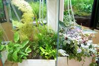 観賞魚と観葉植物を同時に育てるセット「brio35」