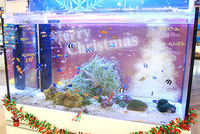 水槽をデコレーションしてクリスマス気分