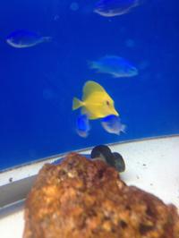 綺麗な海水魚!