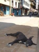 ミニ写真展 「SLEEPING DOGS」