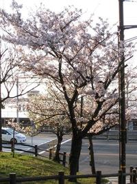 須磨浦公園の桜2010.04.03