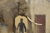 カメラカフェ報告@王子動物園