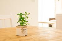 3月22日(木)~3月25日(日) 沖縄直送観葉植物フェア〜お部屋に緑を〜