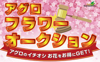 1月20日(土) アグロフラワーオークションを開催!