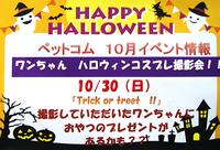 10月30日(日) ワンちゃん ハロウィンコスプレ撮影会