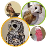 《終了しました》 1月2日(月・振)~1月5日(木) 「フクロウ」たちと一緒に記念撮影しよう!