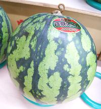 夏の果物スイカ&メロンはいかがですか?