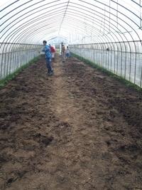 土作り開始。万願寺唐辛子の苗も出荷待ちです。