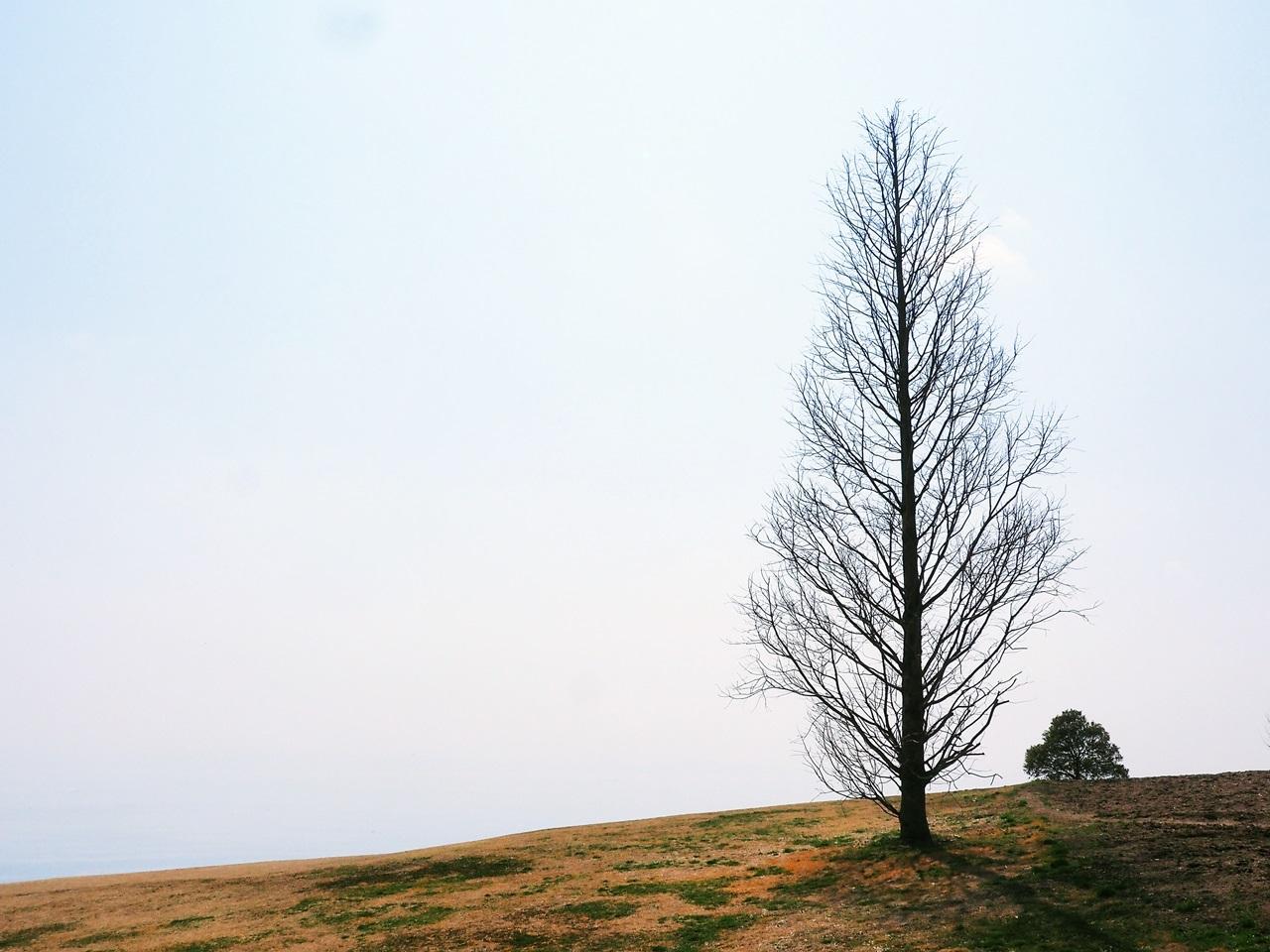 大地に根を張る一本の大きな木 しっかりと根を張ることで長・・・