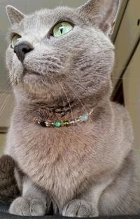 猫用ネックレスのオーダーメイド|愛情いっぱいのアクセサリー