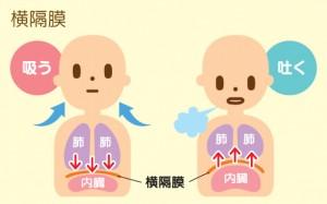 腹式呼吸で健康に(第1回)