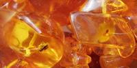 【天然石の産地:日本】有名な天然石の産地-琥珀(アンバー)-