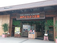 神戸どうぶつ王国でレッサーパンダに会って来たよ!