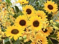 Mimiloccoを彩る夏の花