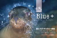 写真展「Blue+」に参加していますPhoto Exhibition
