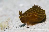 ウミウシはかわいい? Met sea slug..is it cute?