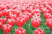 花と鳥に癒されてHealed by flower&bird