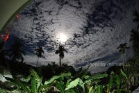 明日は満月Full Moon Tomorrow