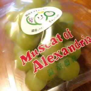 【やっと】マスカット!!!