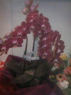 2008年11月28日