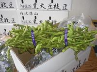 丹波篠山特産「黒大豆枝豆」今年も如何ですか?