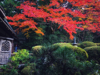 京都紅葉めぐり2017 一乗寺 詩仙堂でゴキゲン!
