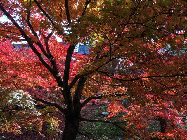京都紅葉めぐり。いよいよ紅葉も最後の時期になってきました・・・