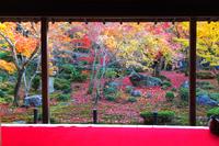 京都紅葉めぐり2017 圓光寺