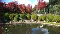 京都紅葉めぐり2017 洛北 妙満寺は紅葉の穴場だった