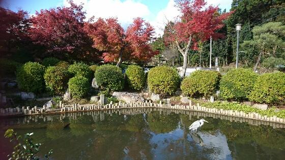 2017年11月19日、床もみじの岩倉実相院のあと、近くで紅葉が ・・・
