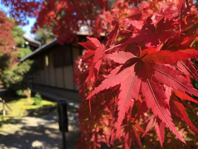 11月12日、紅葉咲き始めの西山浄土宗総本山光明寺へ。紅葉で・・・