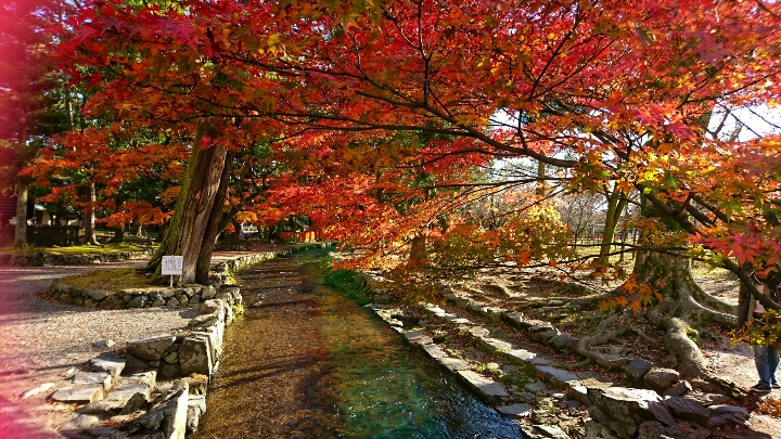 今一番キレイであろう、京都の紅葉。 上賀茂神社(賀茂別雷神・・・