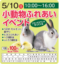 5/10(日) 小動物ふれあいイベント開催!