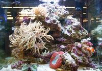 お家に熱帯魚やサンゴの海の世界を♪