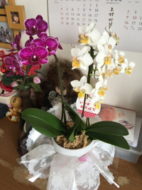 母の部屋にお花が匂う日