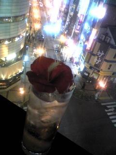 2009年01月29日