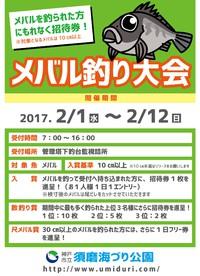 (須磨)メバル釣り大会開催中!!