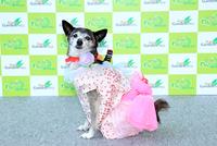 ファッションショー個人部門:受賞されたワンちゃん(2)