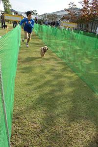 30m競争【わんわんフェスティバル】