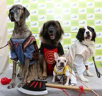 神戸最大級のペットの祭典『わんだふるコレクション』次回は今秋開催!