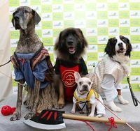 ファッションショー団体部門:グランプリ・準グランプリに輝いたワンちゃん!