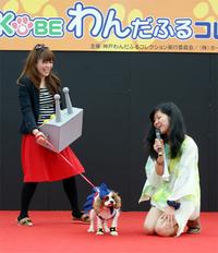 ファッションショー個人部門:部門賞に輝いたワンちゃん