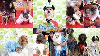 ファッションショーへの出場犬募集中!